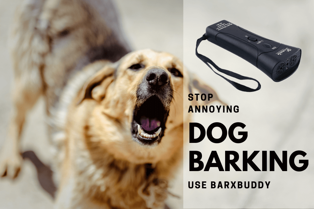BarxBuddy review